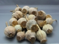 Dried Poppy Pods FOR SALE /Dried Flower Collection - 2 LB