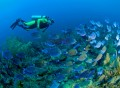 Snorkeling Tour Dubai | Adventure Safari Tour