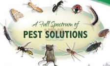 Pest Control in Dubai