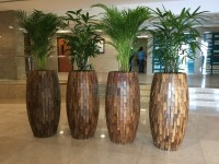 Online indoor plants supplier in Dubai