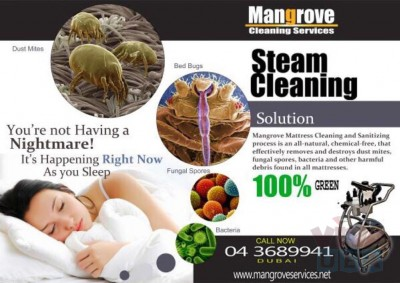 Professional Deep/Steam Cleaning Services for Apartment, Offices, Villa