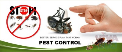 Experts & Professional Pest Control – Starting 149 AED