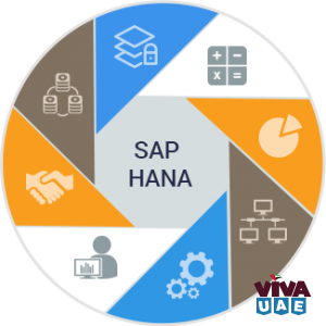 SAP/HANNA Training Starting Vision institute-0509249945
